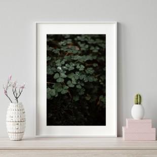 Plagát na stenu s motívom lesného koberca
