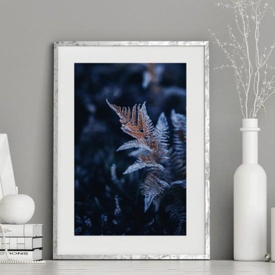 Plagát čiernej farby na stenu s motívom zamrznutého papradia
