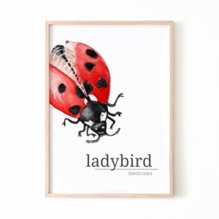 Plagát na stenu s motívom lienky Ladybird
