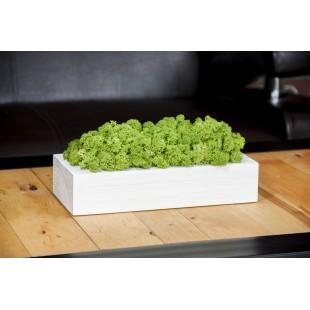 Biely drevený kvetináč so zeleným machom