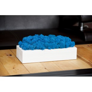 Drevený biely kvetináč s modrým machom