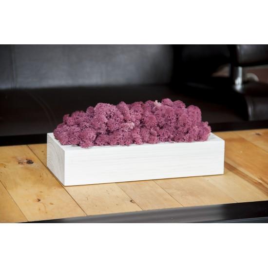 Machová fialová dekorácia v bielom drevenom kvetináči