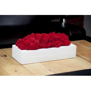 Červený dekoračný mach v bielom kvetináči