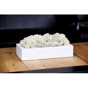 Biely drevený kvetináč s machom
