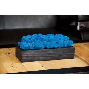 Ručne vyrábaná modrá machová dekorácia v čiernom drevenom kvetináči