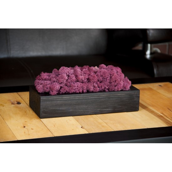 Fialový mach v čiernom drevenom kvetináči