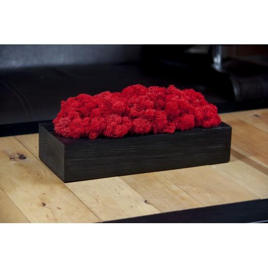 Červený mach v čiernom drevenom kvetináči