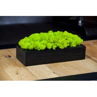 Sviežo zelený mach v čiernom drevenom kvetináči