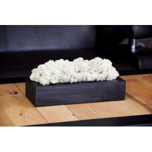Biely dekoračný mach v čiernom drevenom kvetináči