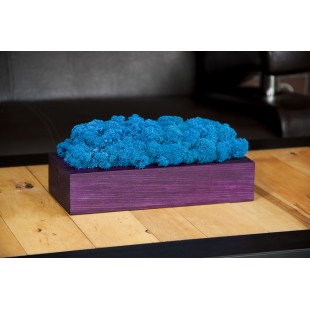 Modrý dekoračný mach vo fialovem drevenom kvetináči