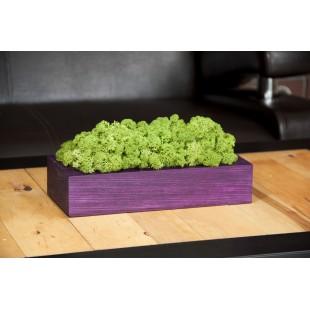 Dekoračný mach v drevenom fialovom kvetináči