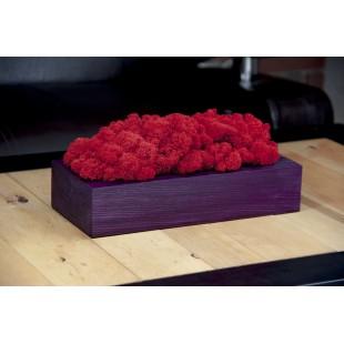 Mach červenej farby v drevenom fialovom kvetináči
