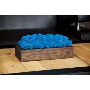 Modrý dekoračný mach v orechovom drevenom kvetináči