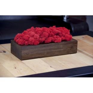 Červený dekoračný mach v orechovom drevenom kvetináči