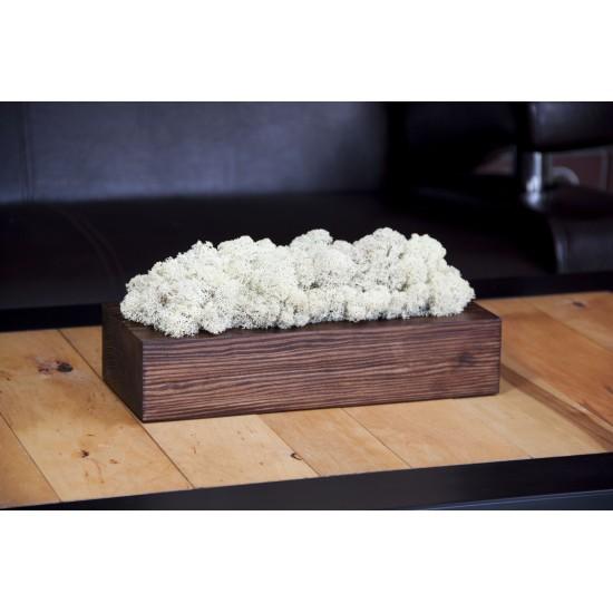 Biely dekoračný mach v orechovom kvetináči