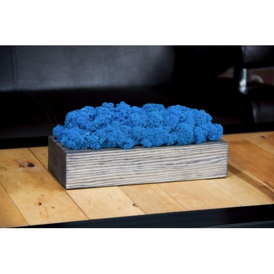 Machová modrá dekorácia v sivom drevenom kvetináči