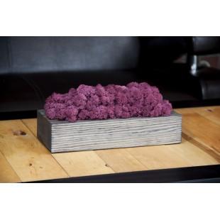 Machová fialová dekorácia v sivom drevenom kvetináči