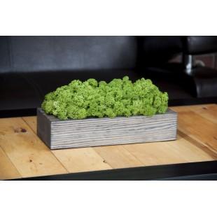 Machová matná zelená dekorácia v sivom drevenom kvetináči