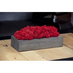 Dekorácia z červeného machu v sivom drevenom kvetináči