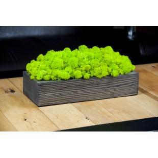 Dekorácia z machu v sivom drevenom kvetináči