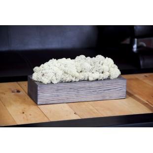 Machová biela dekorácia v sivom drevenom kvetináči