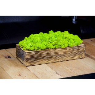 Zelená dekorácia z machu v drevenom kvetináči