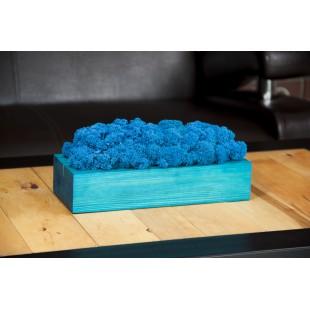 Modrá machová dekorácia v tyrkysovom drevenom kvetináči