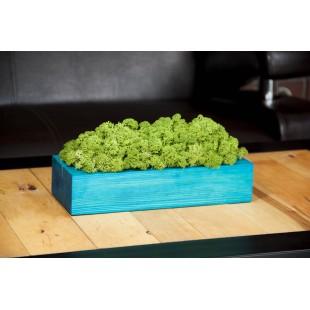 Handmade zelená machová dekorácia v tyrkysovom drevenom kvetináči