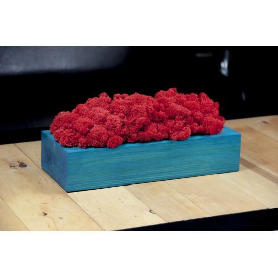 Červená machová dekorácia v tyrkysovom drevenom kvetináči