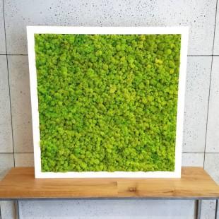 Obraz zo zeleného sobieho machu 70x70 cm