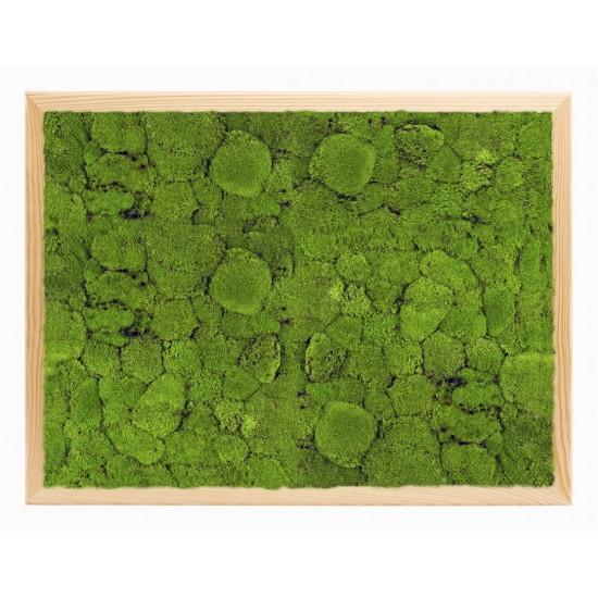 Vankúšový svetlozelený machový obraz v drevenom ráme 60x40 cm