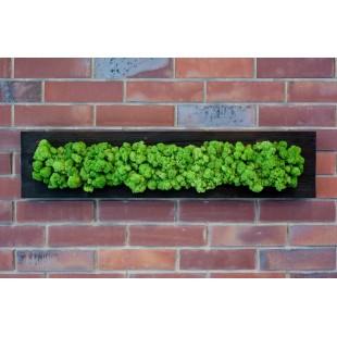 Obraz zo zeleného sobieho machu drevenom ráme